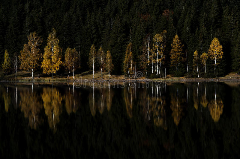 Colored tree reflection in a mountain lake stock photo