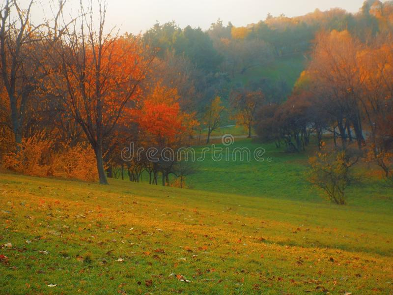 Colored trees in on mountain zone in a november foggy day royalty free stock photos