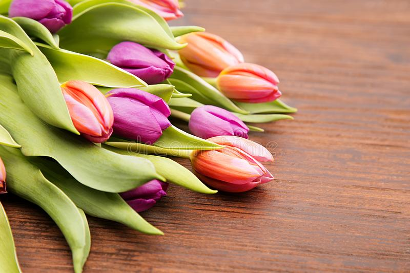Colored tulipe, easter and spring flower royalty free stock images