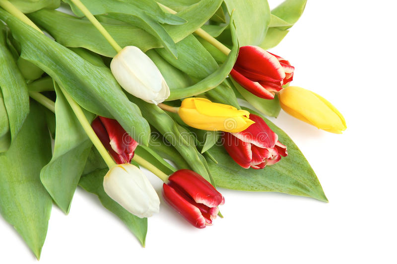 Download Colored tulips stock image. Image of bloom, celebration - 10437621