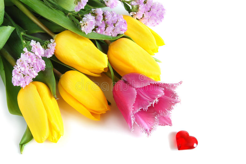 Colored tulips stock image