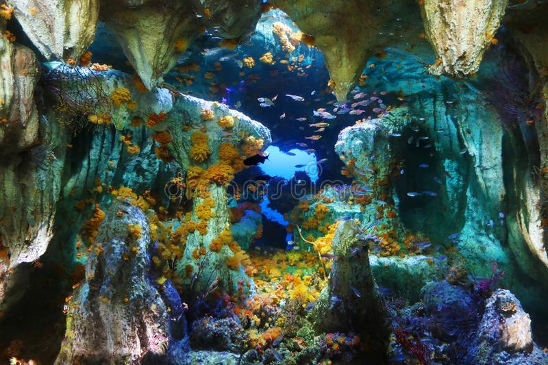 Colored underwater deep landscape royalty free stock photos