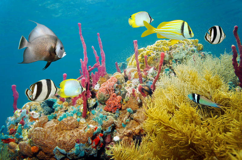 Colored underwater marine life in a coral reef. With tropical fish, Caribbean sea