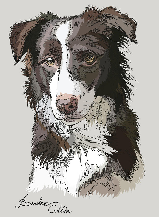 Free Colored Vector Border Collie Stock Photo - 92617950