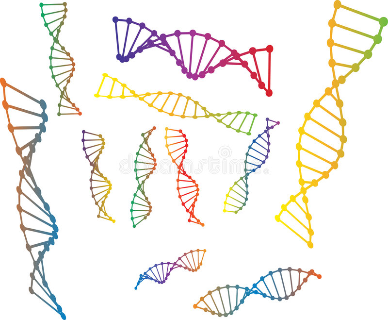 Colored vector illustration of dna model royalty free stock photography