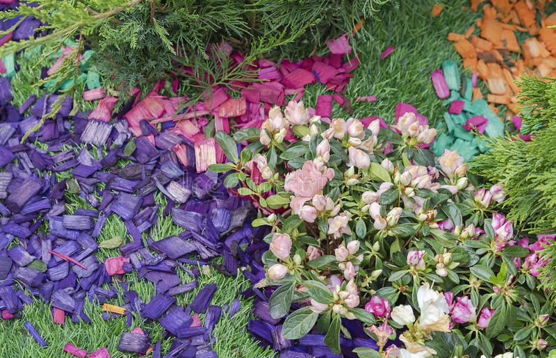 Colored wood chips in the landscape design of the garden. Colored wood chips in the design of a flower bed.  royalty free stock photography