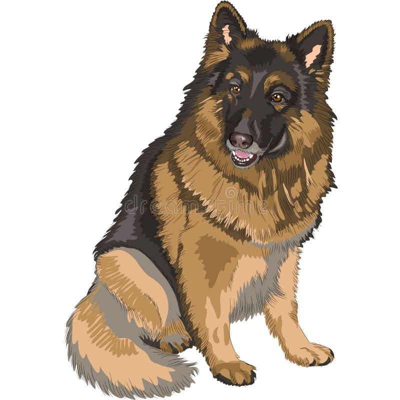 Coloree la casta del pastor alemán del perro del bosquejo stock de ilustración