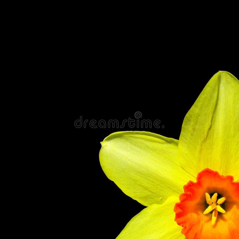 Colores Asoleados Fotografía de archivo