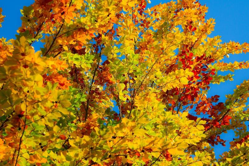 Colores brillantes del otoño fotos de archivo libres de regalías