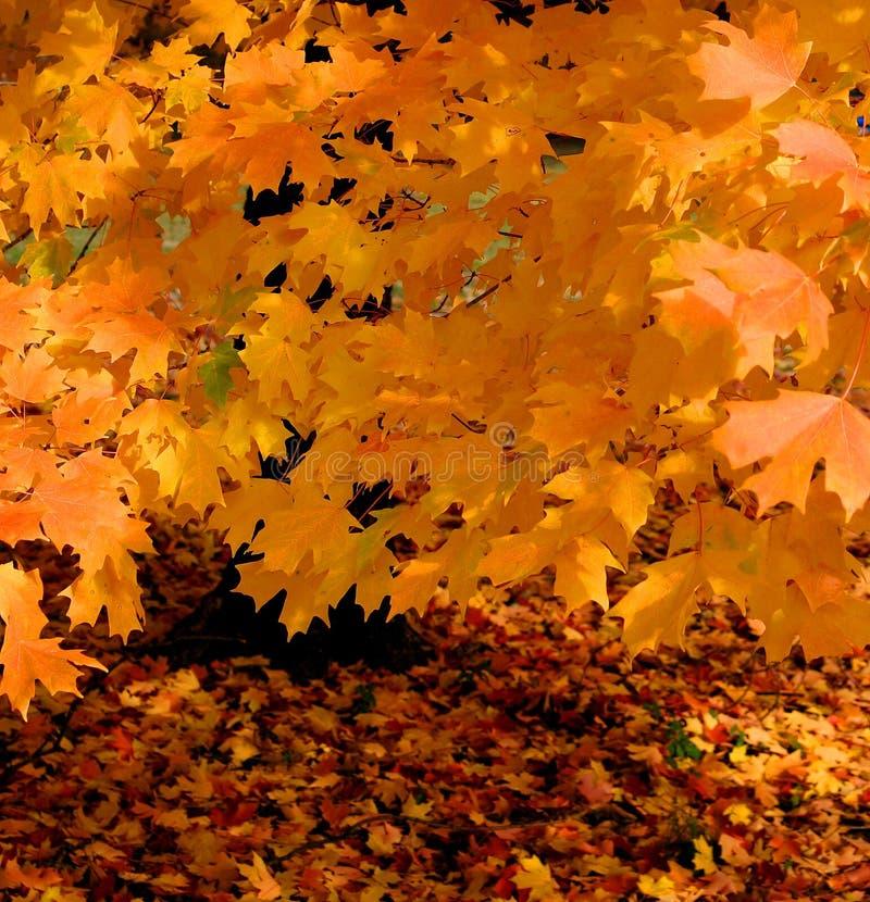 Colores brillantes en árbol foto de archivo