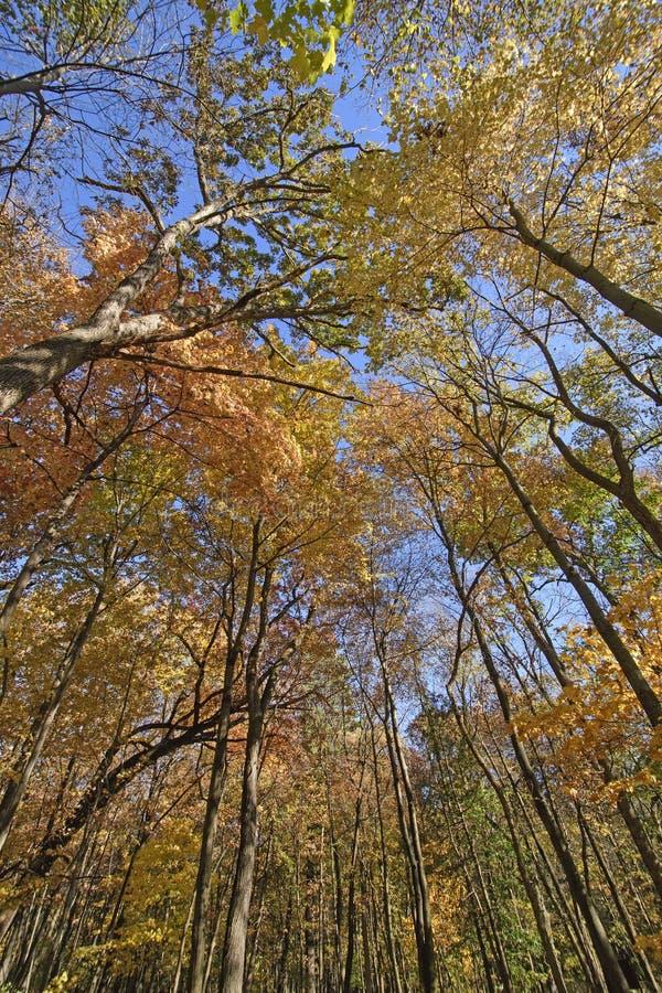 Colores brillantes en el bosque de la caída foto de archivo