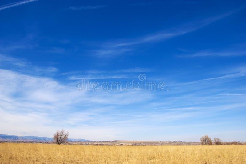 Colores brillantes en la pradera de Colorado fotografía de archivo