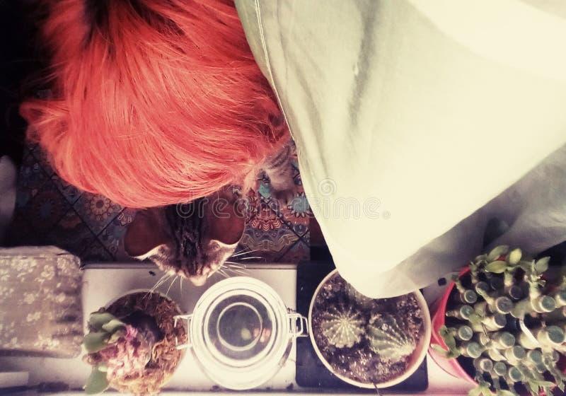Colores, cabezas y plantas imagen de archivo