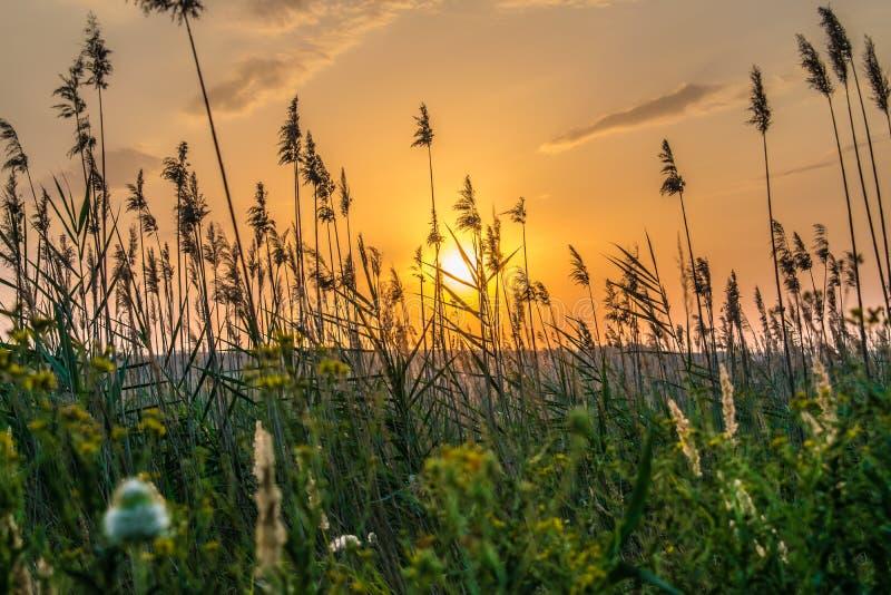 Colores calientes y calientes y sombras de paisajes hermosos de Rusia en la región de Rostov Campos locales de girasoles amarillo fotografía de archivo