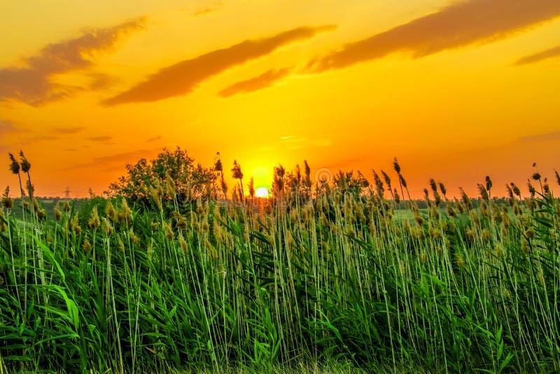 Colores calientes y calientes y sombras de paisajes hermosos de Rusia en la región de Rostov Campos locales de girasoles amarillo imágenes de archivo libres de regalías