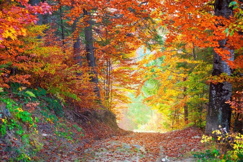 Colores de Autumn Fall Leaves que sorprenden en paisaje salvaje del bosque imágenes de archivo libres de regalías