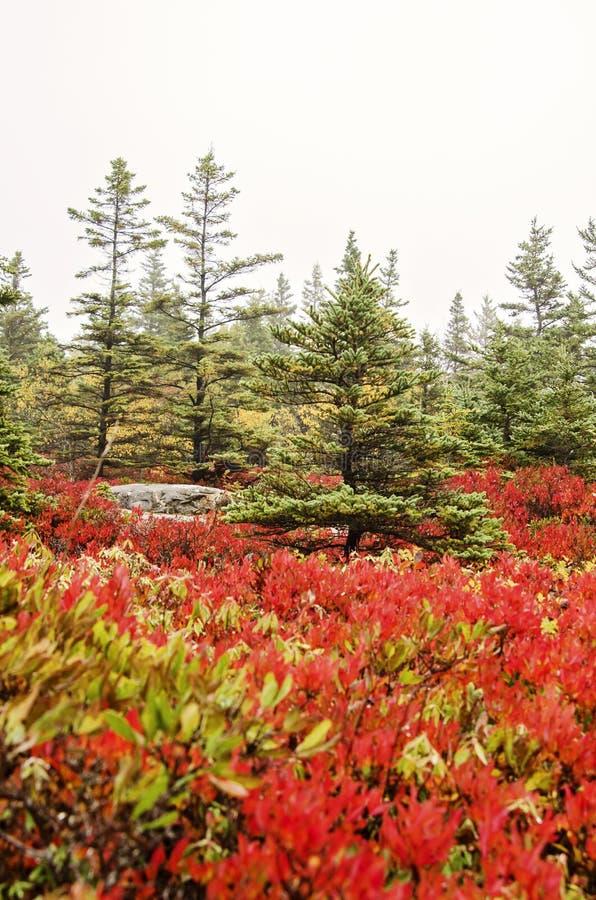 Colores de la caída del parque nacional del Acadia fotografía de archivo