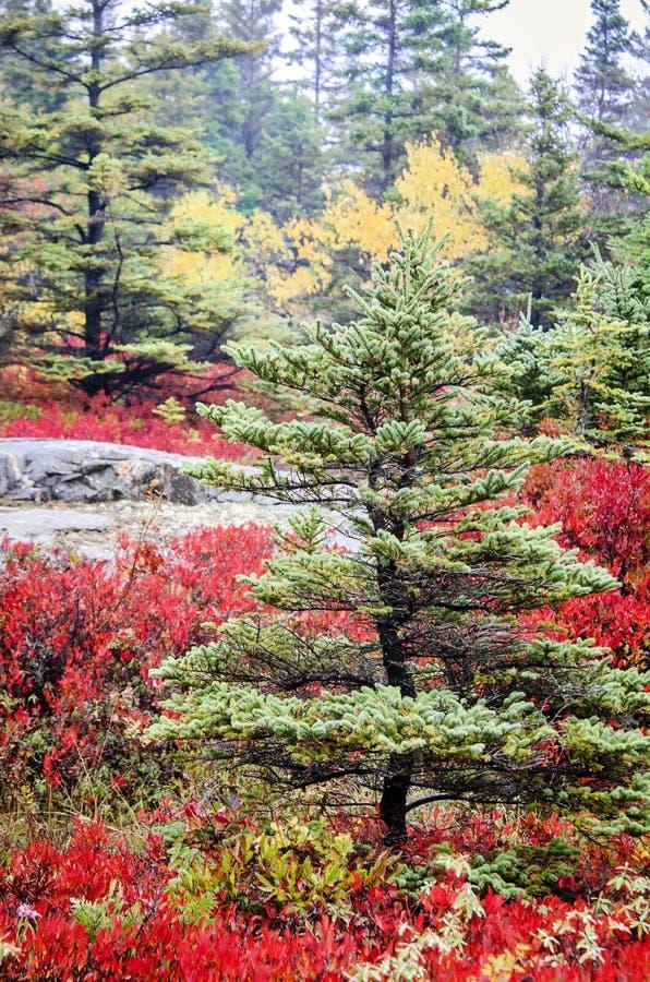 Colores de la caída del parque nacional del Acadia foto de archivo