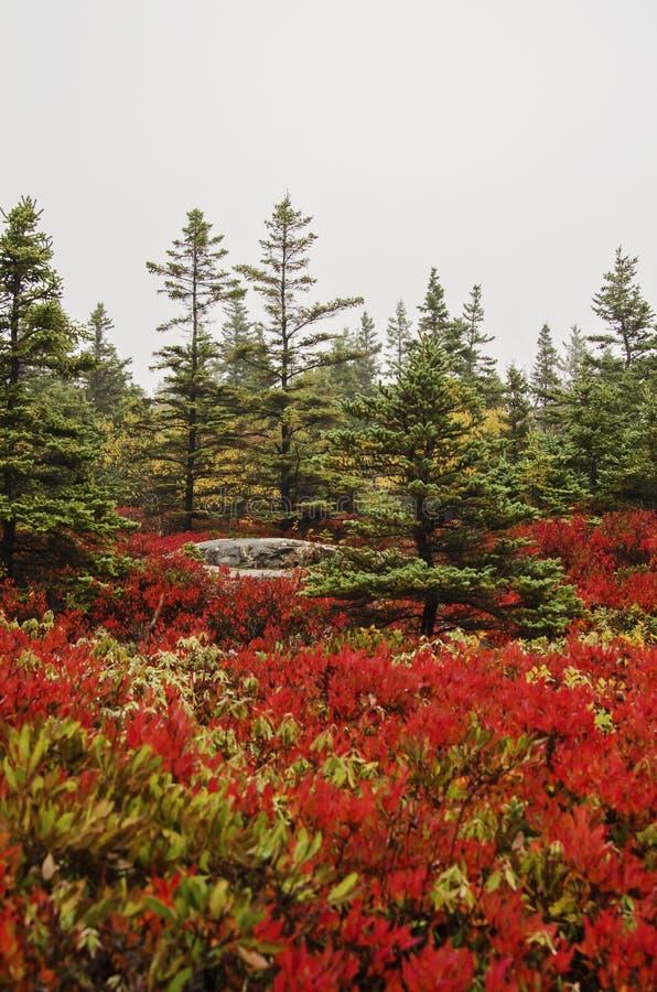 Colores de la caída del parque nacional del Acadia imagenes de archivo