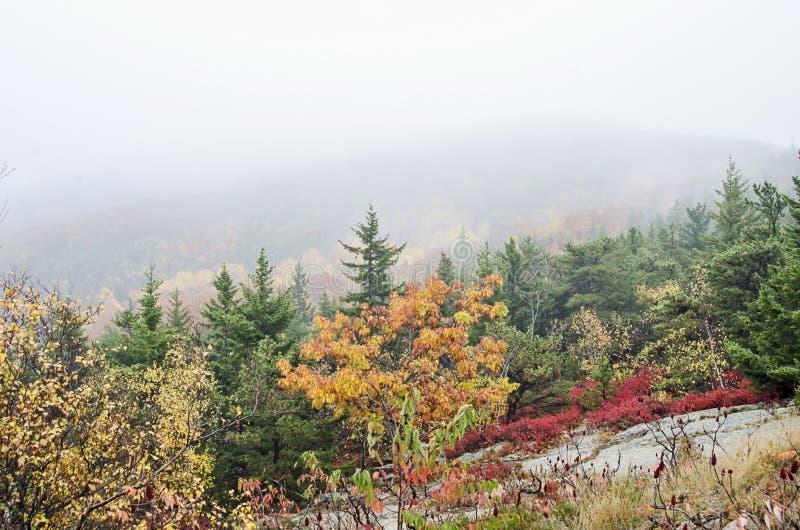 Colores de la caída del parque nacional del Acadia fotos de archivo