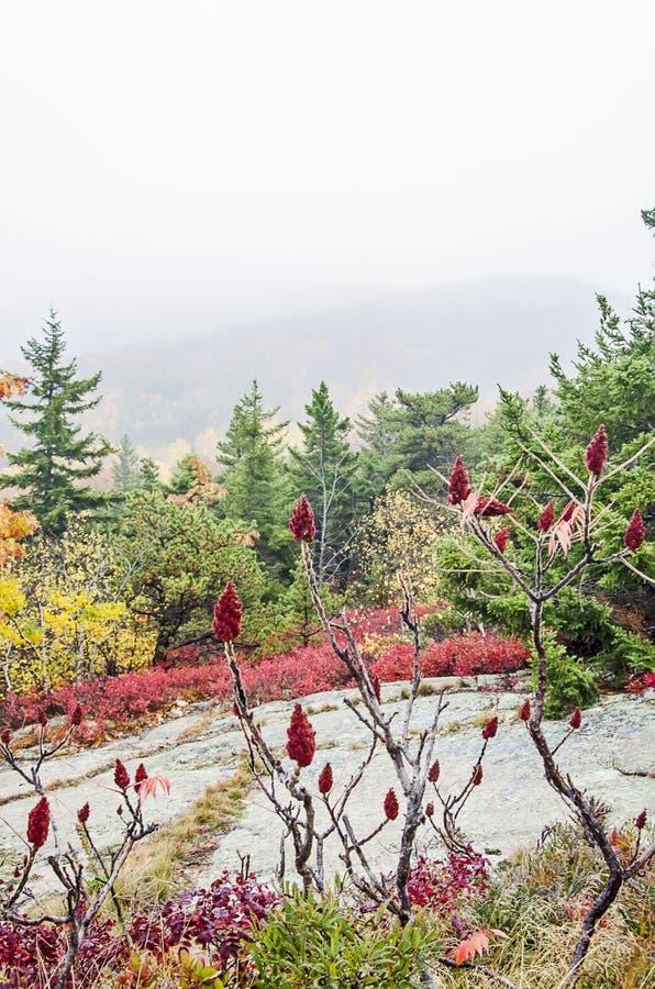 Colores de la caída del parque nacional del Acadia imagen de archivo