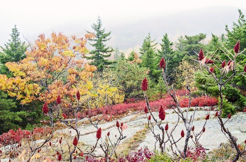 Colores de la caída del parque nacional del Acadia fotografía de archivo libre de regalías