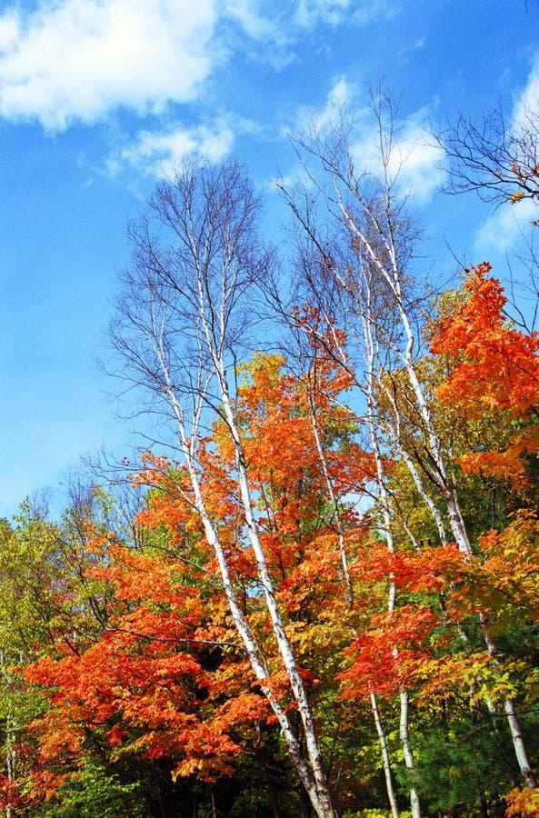 Colores de la caída en Canadá imagen de archivo libre de regalías