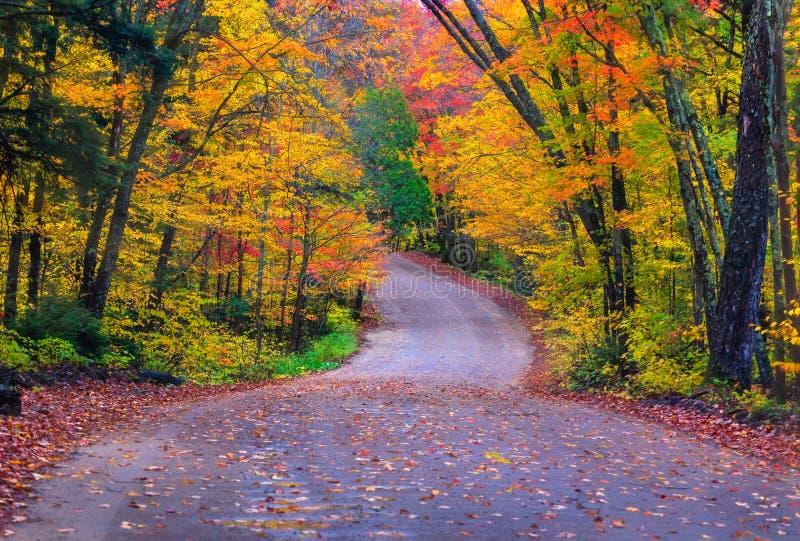 Colores de la caída en el Algonquin, Ontario imagen de archivo libre de regalías