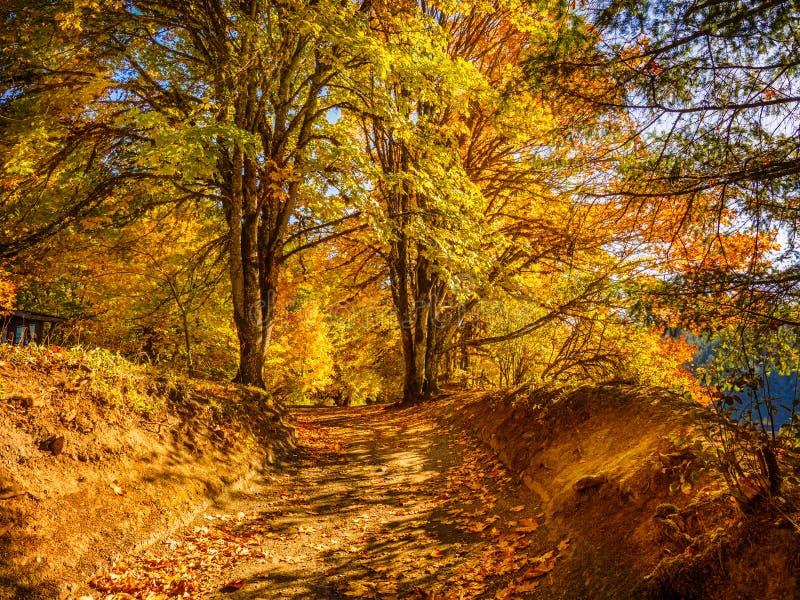 Colores de la caída en el bosque otoñal foto de archivo