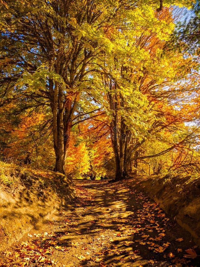 Colores de la caída en el bosque otoñal imágenes de archivo libres de regalías