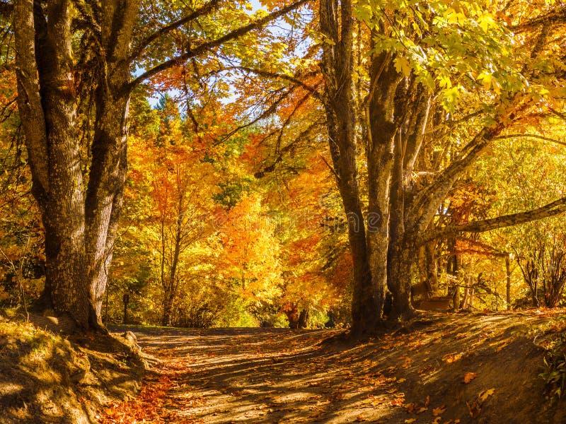 Colores de la caída en el bosque otoñal imagen de archivo