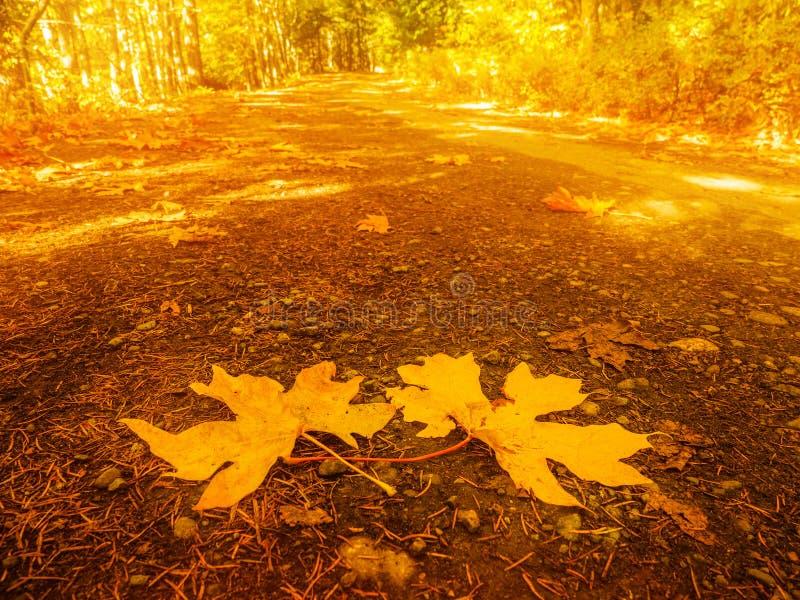 Colores de la caída en el bosque otoñal fotos de archivo libres de regalías