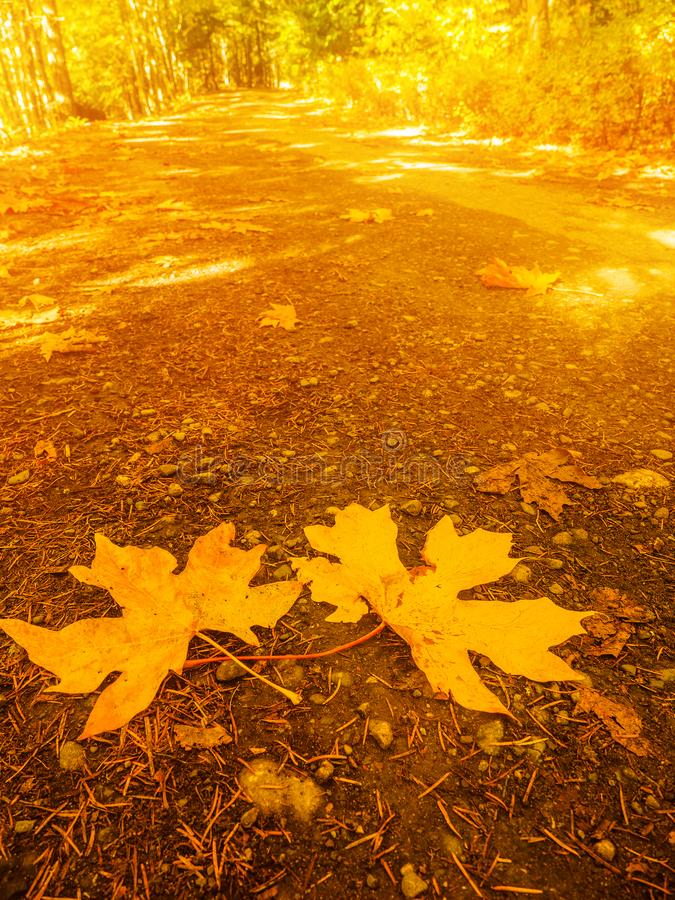 Colores de la caída en el bosque otoñal fotografía de archivo