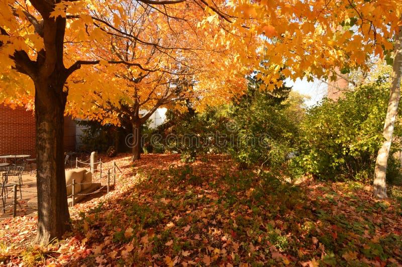 Colores de la caída en el parque zoológico foto de archivo