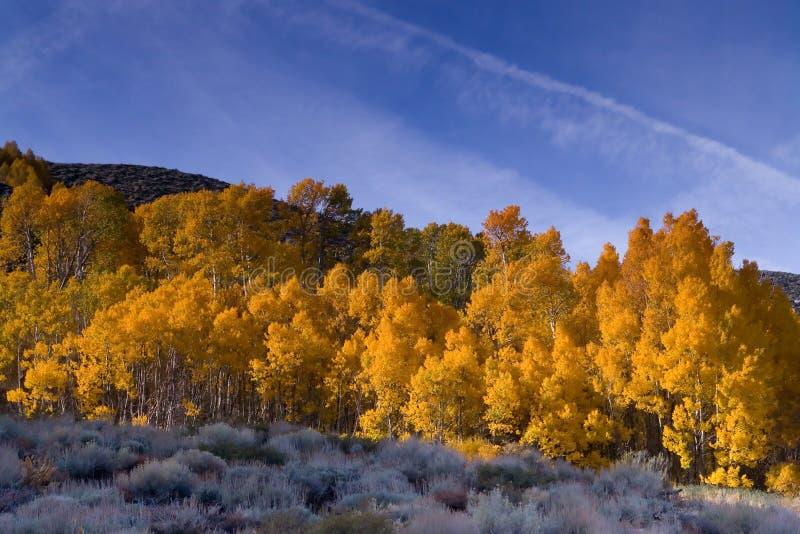 Colores de la caída en la sierra del este imagen de archivo