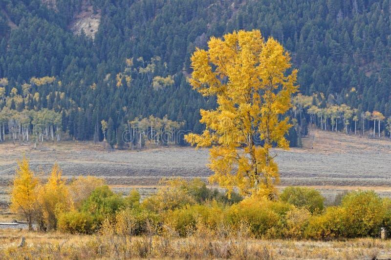Colores de la caída en Lamar Valley, Yellowstone fotografía de archivo