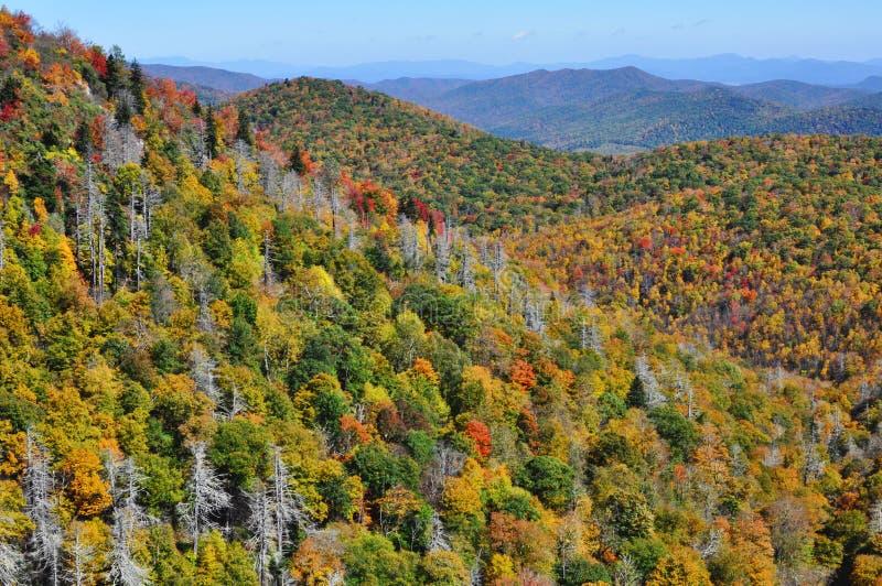 Colores de la caída en montañas apalaches en Ridge Parkway azul fotografía de archivo