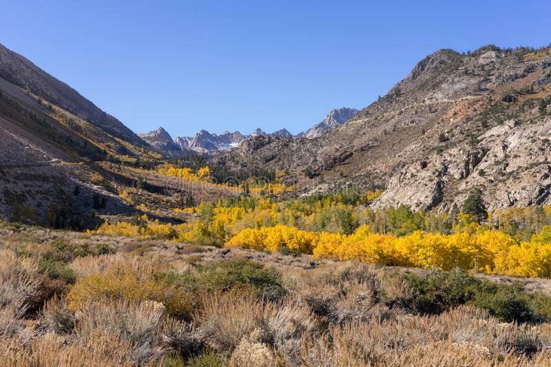 Colores de la caída en Sierra del este, cerca de obispo California fotografía de archivo libre de regalías