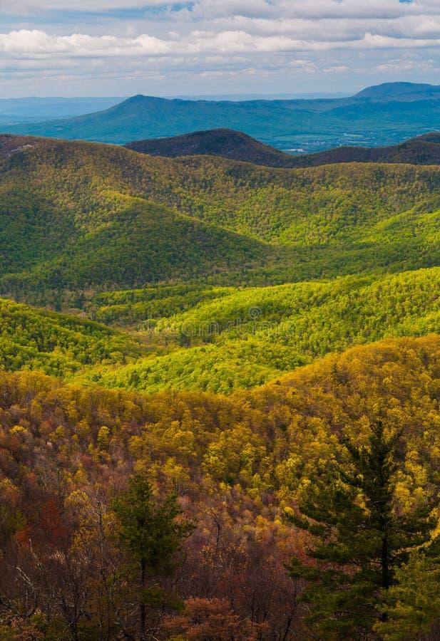 Colores de la primavera en los apalaches, en el parque nacional de Shenandoah, Virginia. foto de archivo