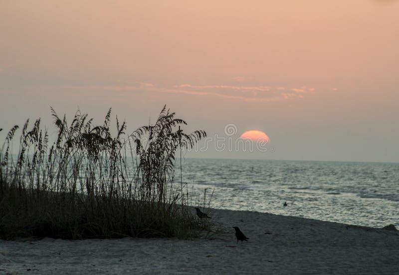 Colores de la puesta del sol en la playa en Key West foto de archivo