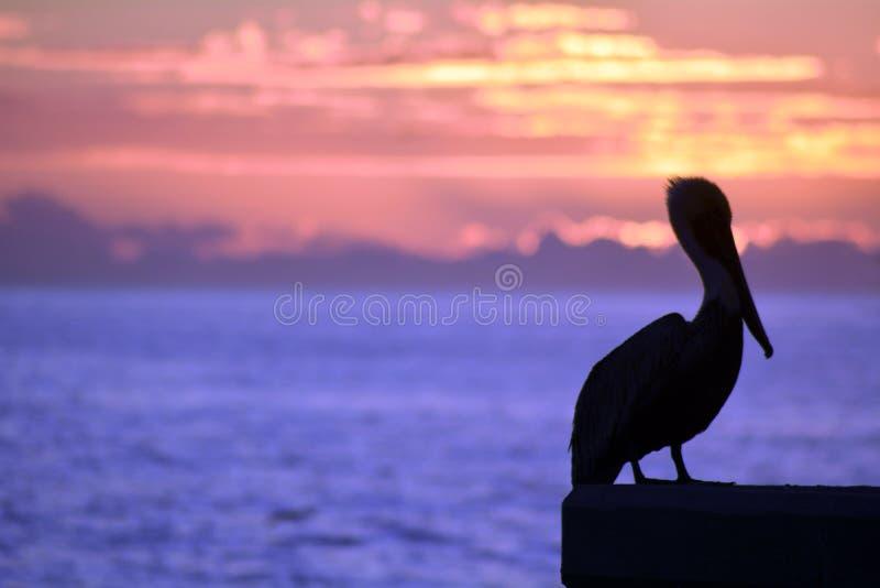 colores de la puesta del sol del océano del pelícano foto de archivo libre de regalías