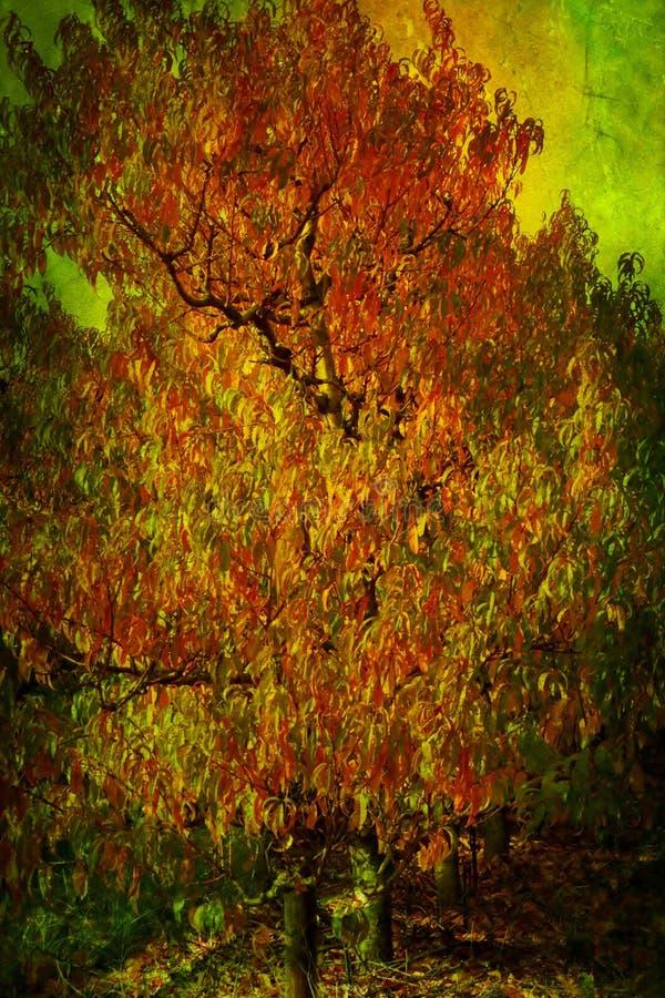 Download Colores de las naturalezas imagen de archivo. Imagen de hojea - 42437689