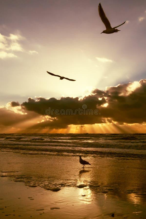 Colores de oro de la puesta del sol imagen de archivo
