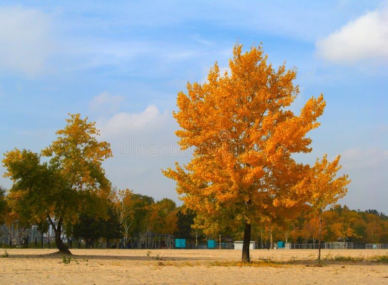 Colores de oro del otoño fotografía de archivo libre de regalías