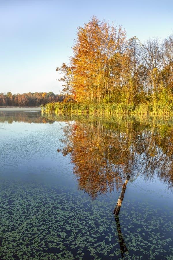 Colores de otoño y duckweed - Refugio nacional de vida silvestre Muscatatuck, Indiana imagen de archivo libre de regalías