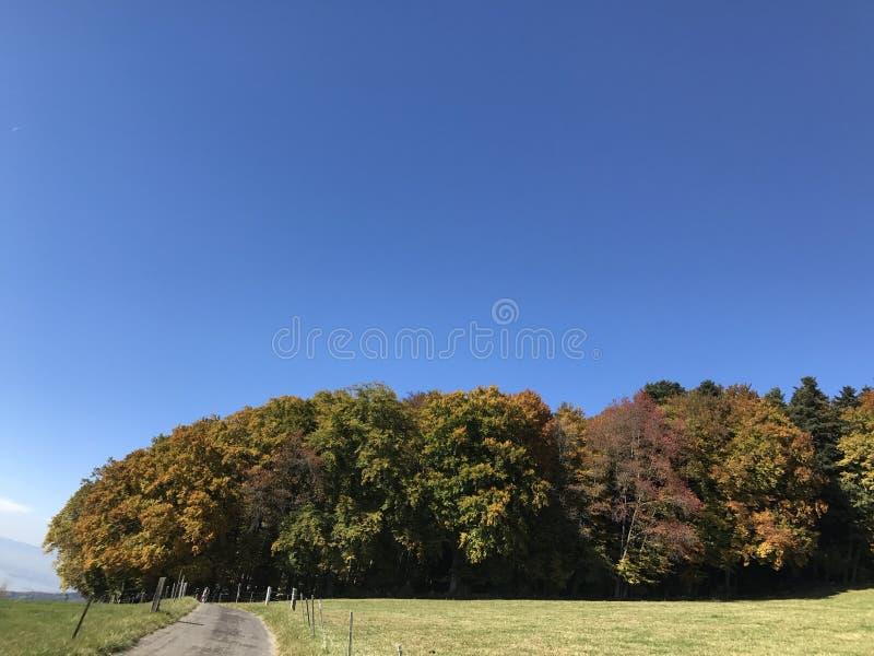 Colores del árbol de Automne fotografía de archivo