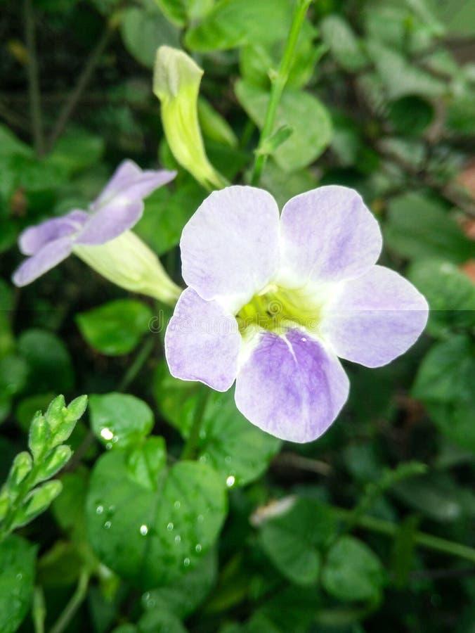 Colores del benjarong cinco del nombre de la flor fotografía de archivo