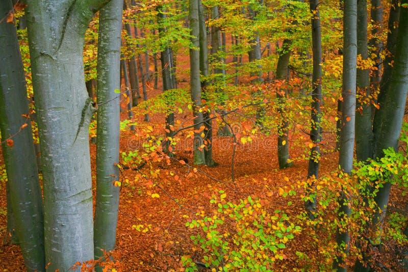 Colores del bosque de la caída fotografía de archivo libre de regalías