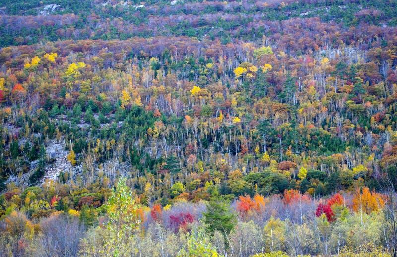 Colores del follaje de caída imagenes de archivo