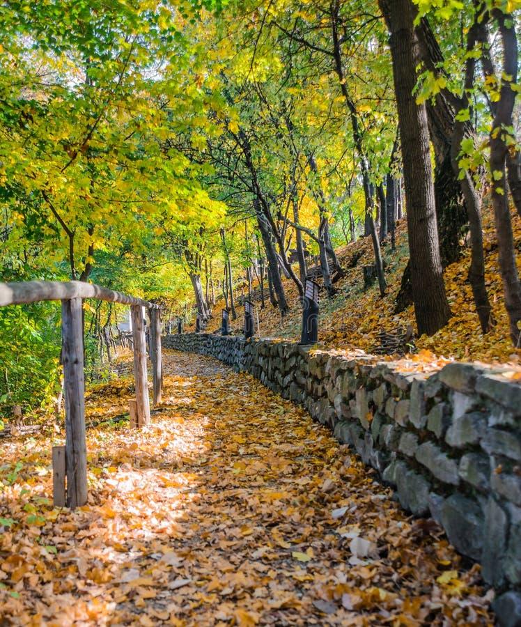 Colores del follaje y trayectoria de bosque cerca de Bucarest, Romaina imagen de archivo libre de regalías